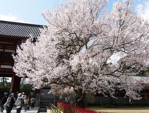 東大寺2.JPG