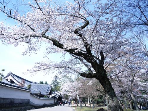 東大寺7.JPG