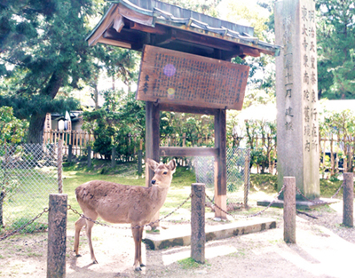 東大寺1.JPG