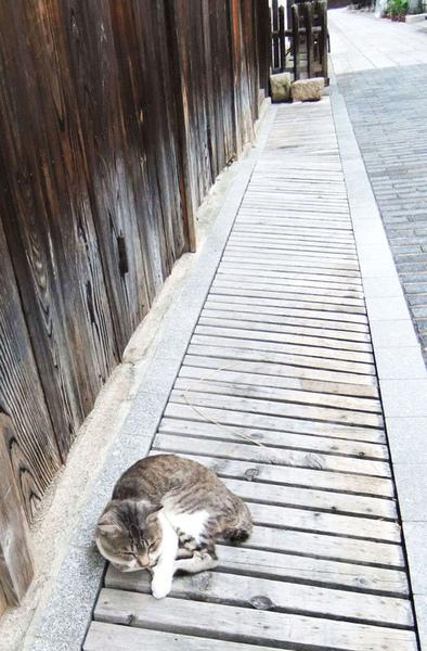 老街少不了貓.jpg