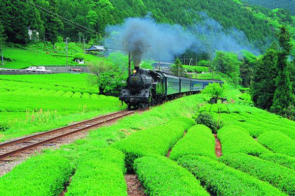 行駛在茶園田間的SL列車(大井川鐵道SL).jpg