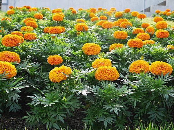 花卉.JPG