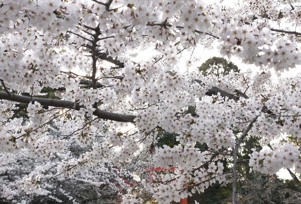 圓山公園-2-劉麗瑛.JPG