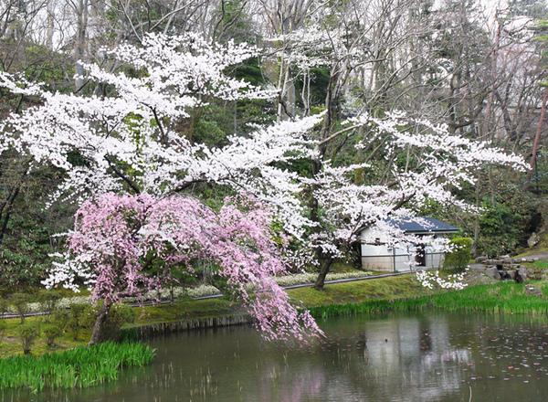 千秋公園4.JPG