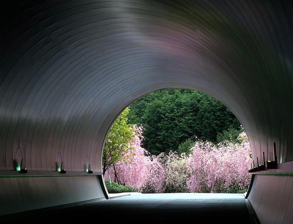 櫻花tunnel.jpg