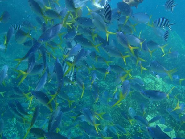 魚群多到把人給遮住了