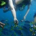 熱帶魚餵食秀