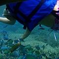 藍色珊瑚礁