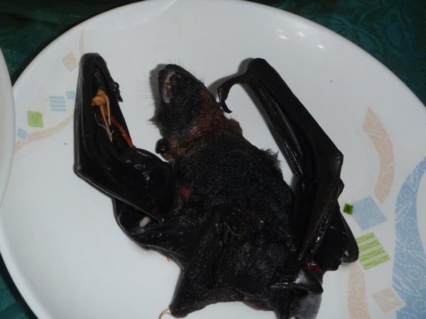 水果蝙蝠的最後身影
