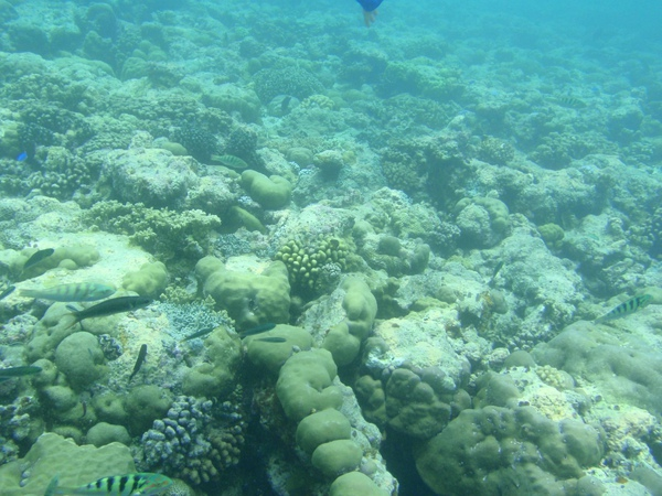 大斷層及淺礁交界處