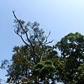天藍,樹綠-2009.10陽明山輕鬆go