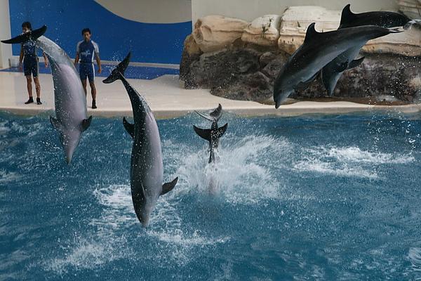 61海豚秀.JPG
