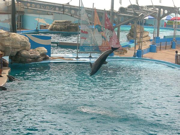60海豚秀.JPG