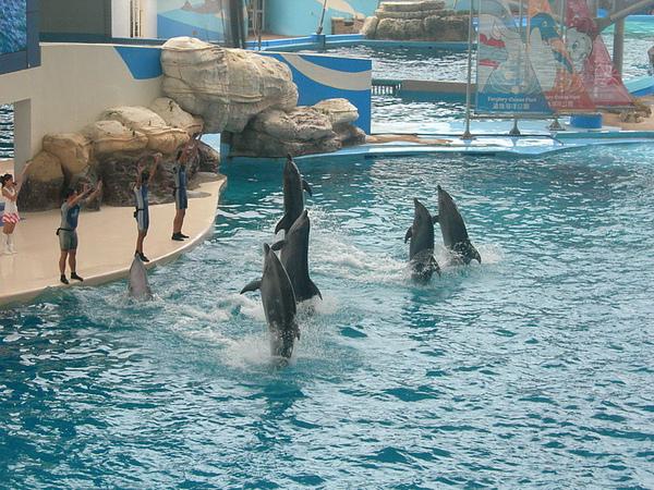 57海豚秀.JPG