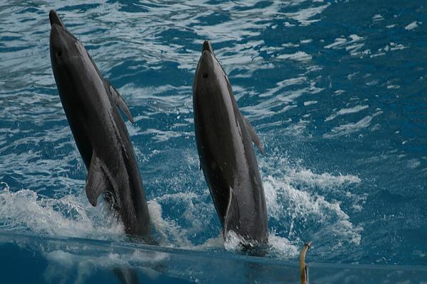 64海豚秀.JPG