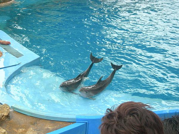 56海豚秀.JPG