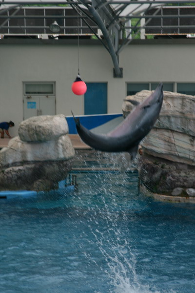 59海豚秀.JPG