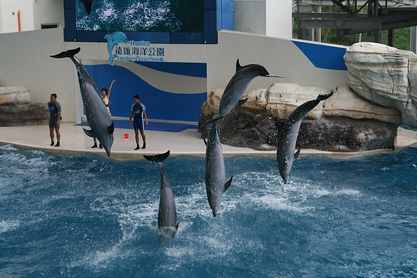62海豚秀.JPG
