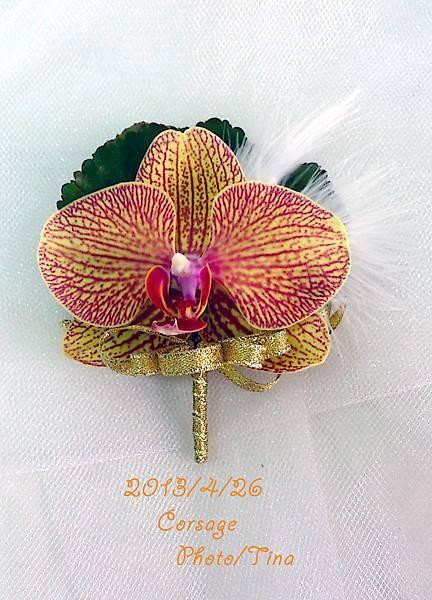 蝴蝶蘭胸花1