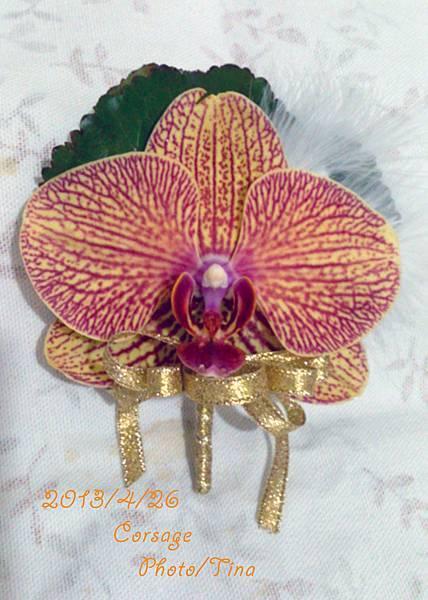 蝴蝶蘭胸花3