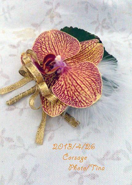 蝴蝶蘭胸花4