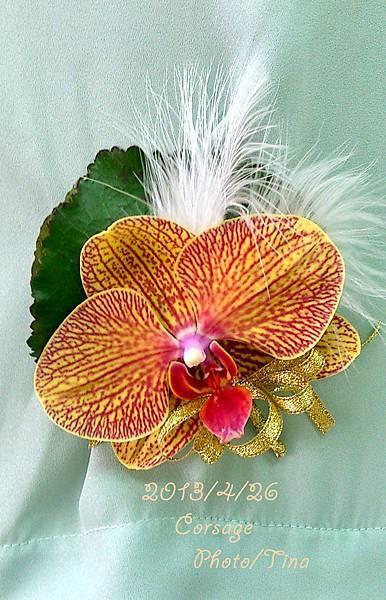 蝴蝶蘭胸花2