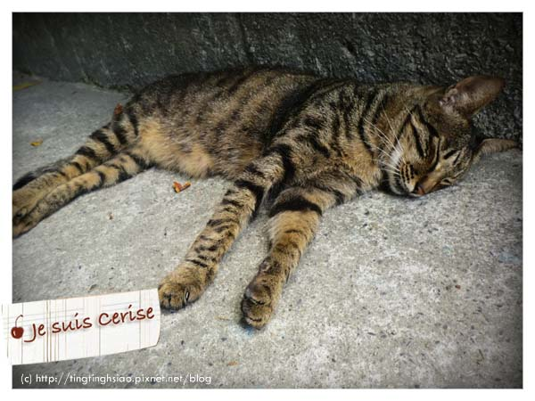 cat village-8