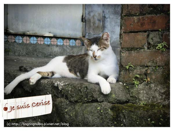 cat village-21