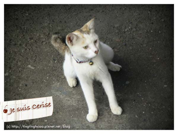 cat village-22