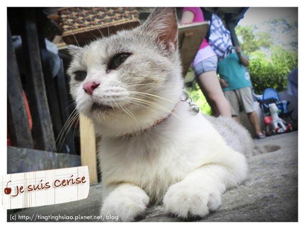 cat village-39