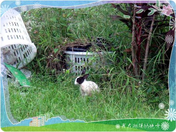 發現小兔子.jpg