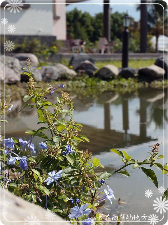 藍雪花.jpg