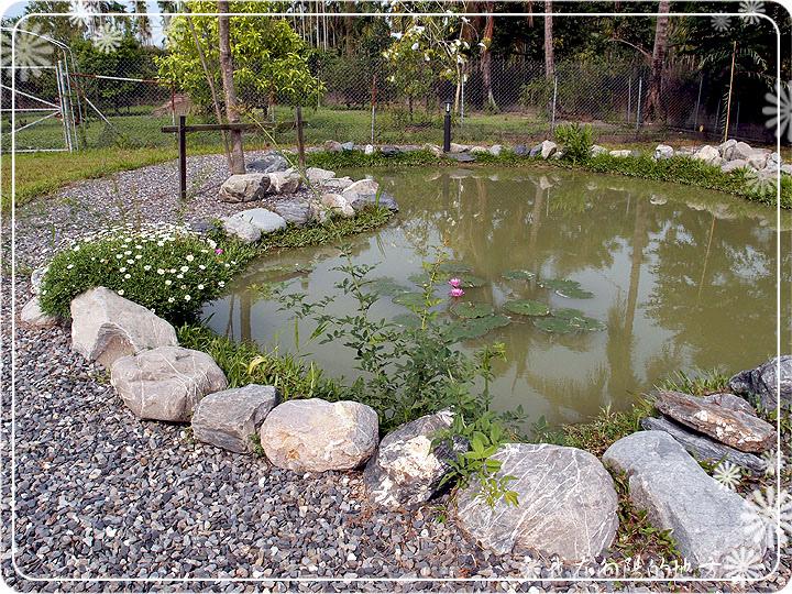 生態池邊的花草.jpg