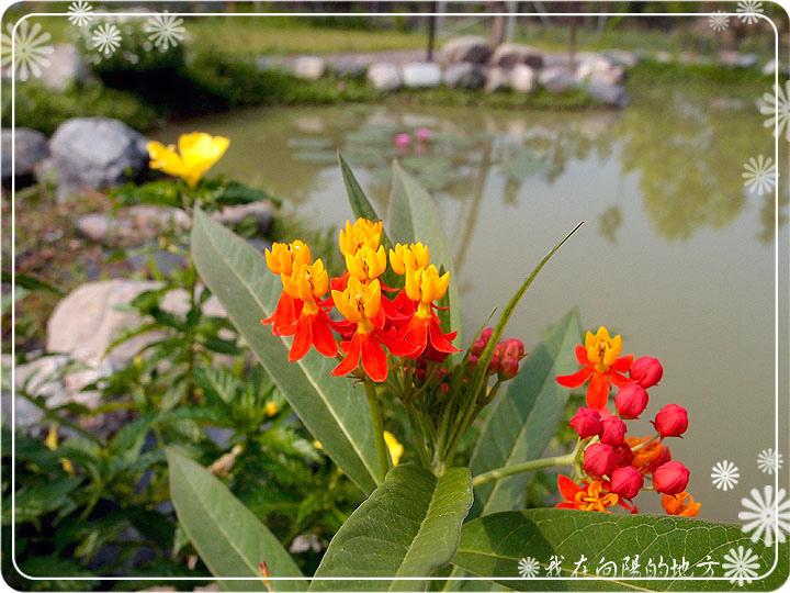 生態池邊的花草_3.jpg