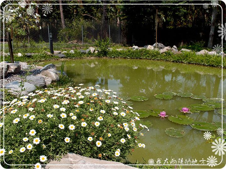 生態池邊的花草_2.jpg