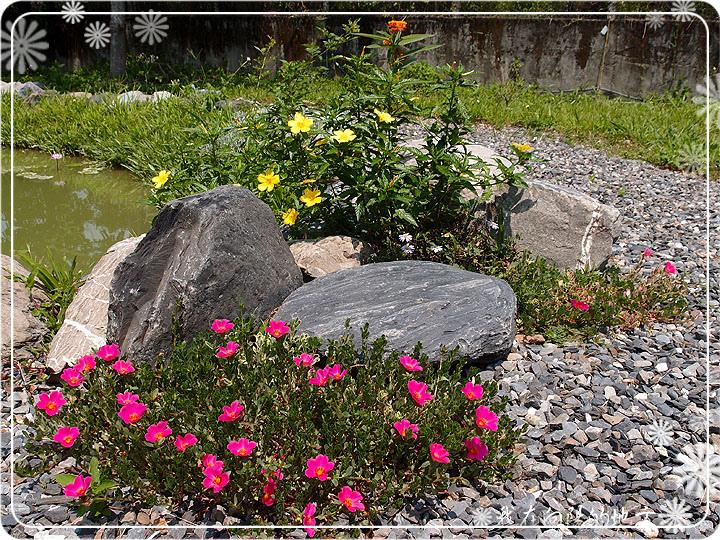 池畔小花.jpg