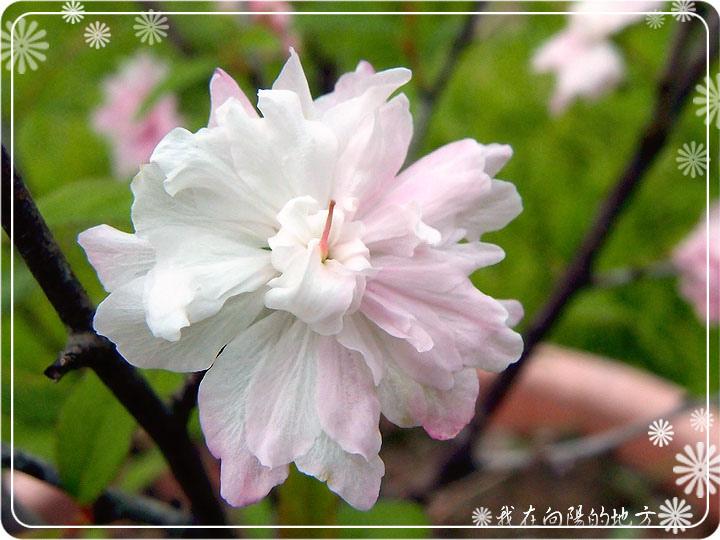 國梅_2.jpg