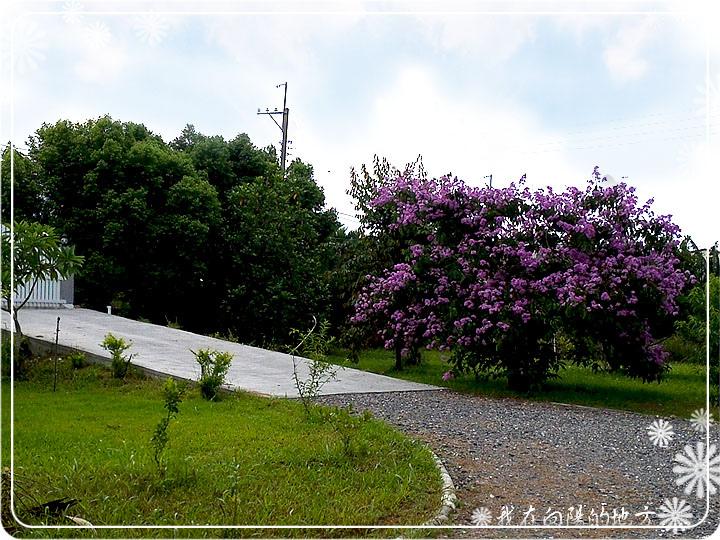 大花紫薇_4.jpg