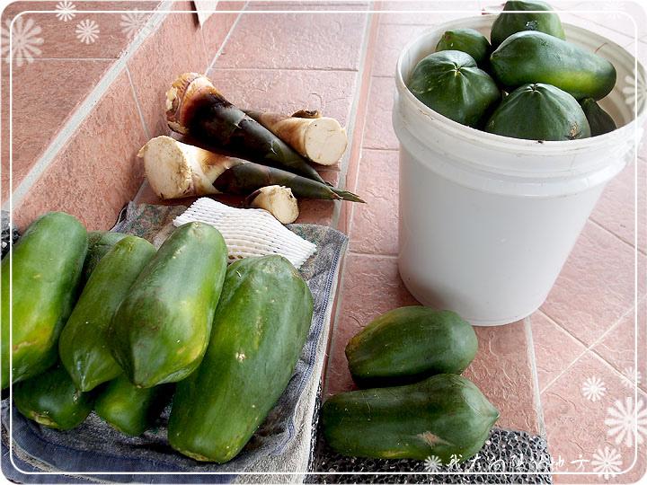 每周都有木瓜可收成.jpg