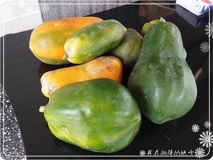 每周都有木瓜可收成_1.jpg