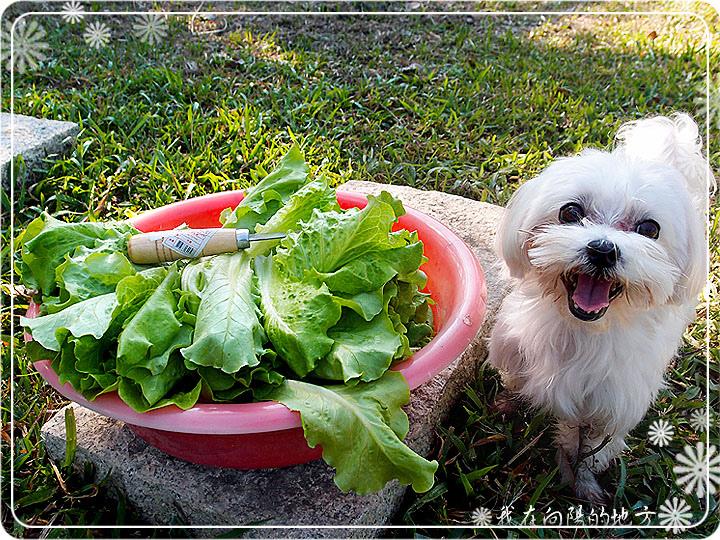 蔬菜收成囉.jpg