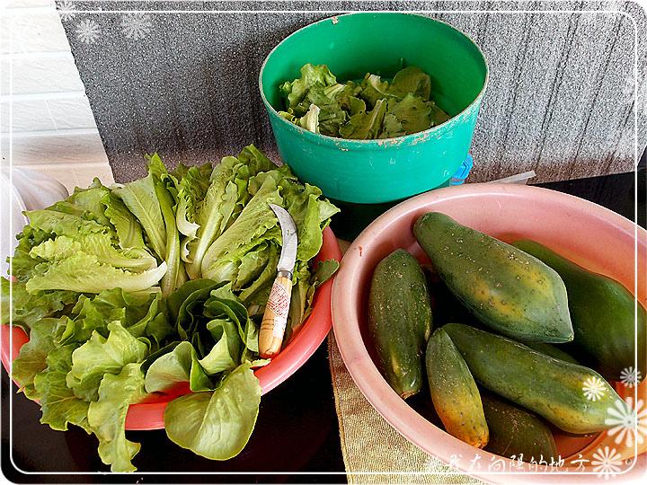 蔬菜收成囉_1.jpg