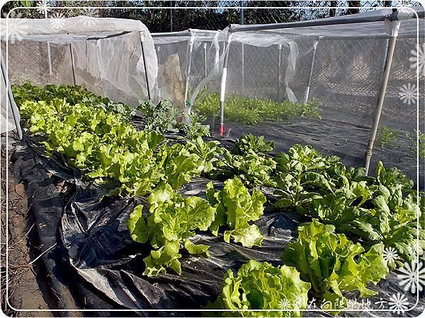 蔬菜收成囉_3.jpg