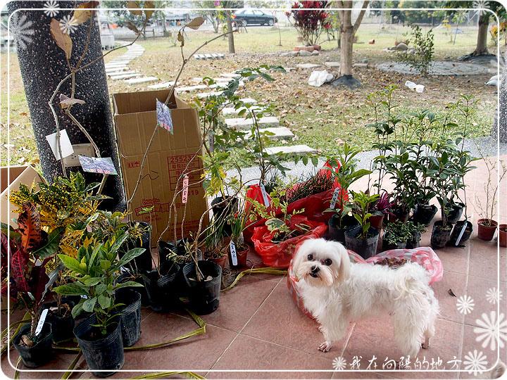 座位區旁小花圃準備種的花.jpg
