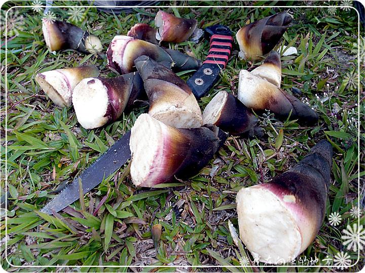 意外的收穫-竹筍.jpg