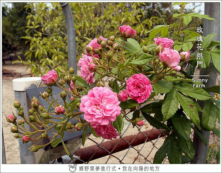 玫瑰拱門緩慢成形中_1.jpg