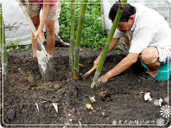 挖竹筍.jpg