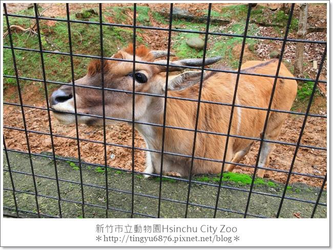新竹市立動物園08.JPG