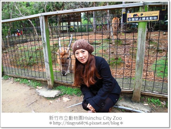 新竹市立動物園12.JPG