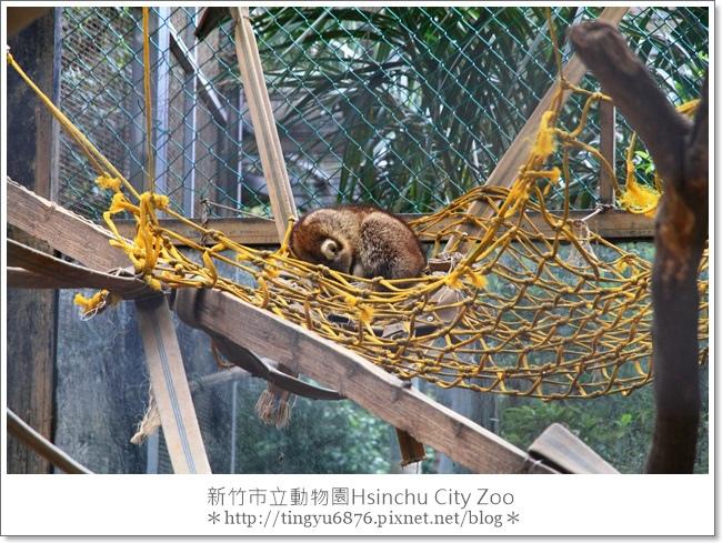 新竹市立動物園13.JPG